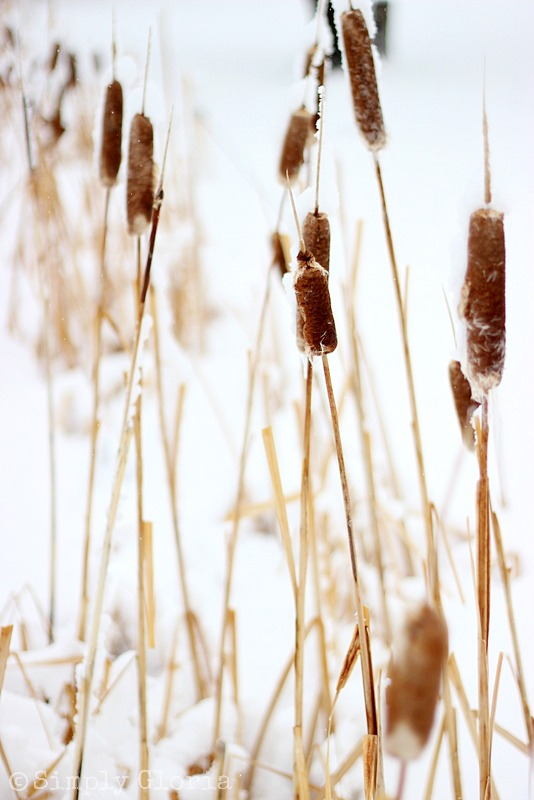 Lazy Sunday, Fresh Fallen Snow by SimplyGloria.com 2