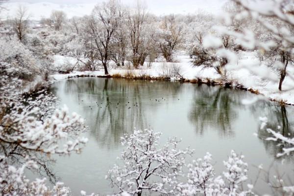 Lazy Sunday, Fresh Fallen Snow by SimplyGloria.com 4