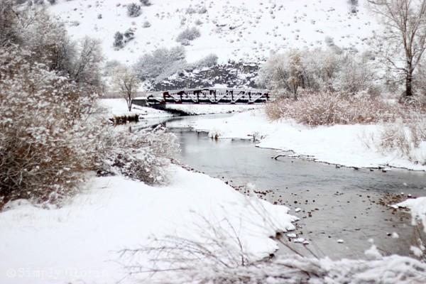 Lazy Sunday, Fresh Fallen Snow by SimplyGloria.com 5