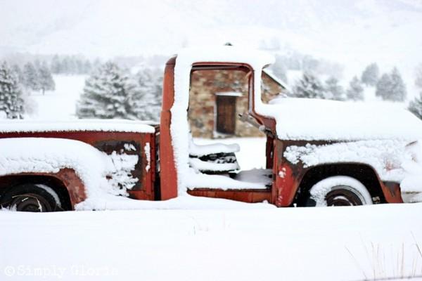 Lazy Sunday, Fresh Fallen Snow by SimplyGloria.com 7