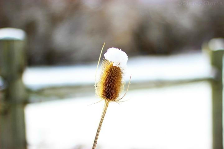 Snow with SimplyGloria.com #February